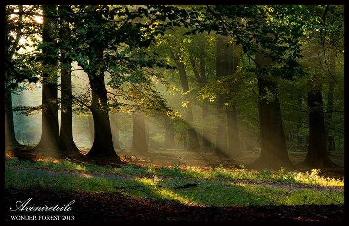 WONDER FOREST1